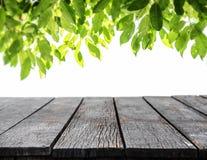 Hout die met groene bladerenachtergrond met panelen bekleden Royalty-vrije Stock Afbeeldingen