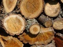 Hout Een boomstam Stock Foto's