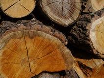 Hout Een boomstam Royalty-vrije Stock Afbeelding
