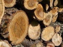 Hout Een boomstam Stock Afbeelding