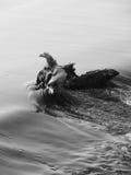 Hout in een rivier Stock Afbeeldingen