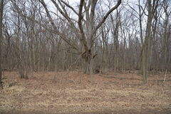 Hout en bomen die uit winter, de klaar voor de lente wachten Stock Fotografie