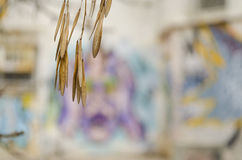 Hout en graffiti Stock Afbeelding