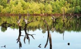 Hout en hout in het bos van het mangrovemoeras stock foto