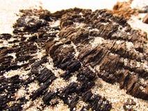 Hout en zand Stock Afbeelding