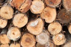 Hout gestapelde textuurboom Stock Afbeelding