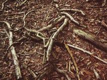 Hout in het bos royalty-vrije stock foto's
