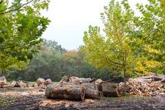 Hout in het bos stock fotografie