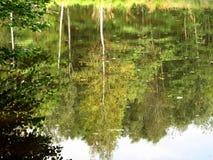 Hout in het water Stock Fotografie
