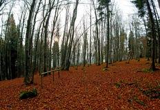 Hout met overvloed van gestorven bladeren royalty-vrije stock foto's
