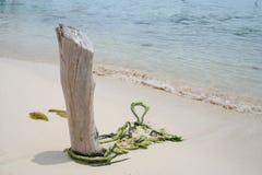 Hout op het strand Royalty-vrije Stock Foto's