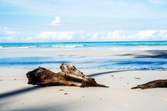 Hout op strand royalty-vrije stock afbeelding