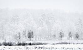 Hout in sneeuw-vlaag royalty-vrije stock afbeelding