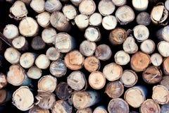 Hout van eucalyptus Royalty-vrije Stock Afbeelding