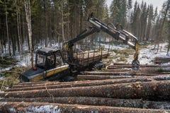 houtbewerking Het registreerapparaat laadt geoogste boomstammen stock afbeeldingen