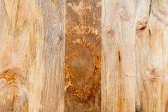 Houten achtergrond - de steekproeven van de mangoboom Royalty-vrije Stock Afbeelding