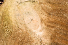 Houten achtergrond - dwarsdoorsnede van boomboomstam stock foto