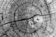 Houten achtergrond en textuur, ringen van gesneden boomboomstam. Royalty-vrije Stock Afbeeldingen