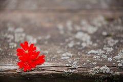 Houten achtergrond met bloemen Royalty-vrije Stock Foto