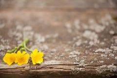Houten achtergrond met bloemen Royalty-vrije Stock Foto's