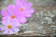 Houten achtergrond met bloemen Royalty-vrije Stock Afbeeldingen