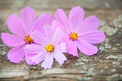 Houten achtergrond met bloemen Stock Foto