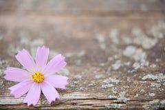 Houten achtergrond met bloemen Stock Fotografie