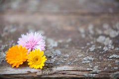 Houten achtergrond met bloemen Royalty-vrije Stock Afbeelding
