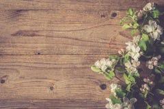 Houten achtergrond met de bloesemtak van de appelboom, prentbriefkaarmalplaatje Royalty-vrije Stock Fotografie