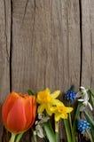 Houten achtergrond met de lentebloemen royalty-vrije stock foto's