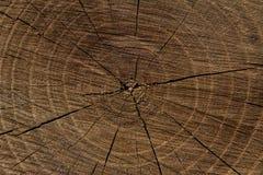 Houten achtergrond Textuur De achtergrond van de boomstomp in het concept van aardeco Stock Foto's