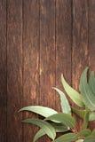 Houten Australische Bladeren Als achtergrond Stock Foto