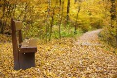 Houten bank bij een bosweg in het de herfstbos Royalty-vrije Stock Fotografie