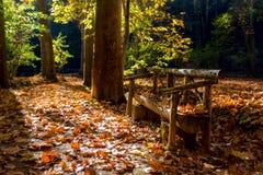 Houten bank in het de herfstpark Royalty-vrije Stock Fotografie