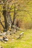 Houten bank op gras dichtbij bomen Royalty-vrije Stock Fotografie