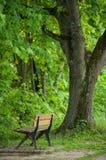 Houten bank in stedelijk park bij de lente royalty-vrije stock afbeelding