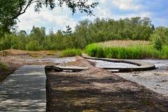 Houten bestrating in modderland met groen vegetatie en bos Stock Afbeelding