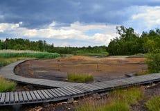 Houten bestrating in modderland met groen vegetatie en bos Royalty-vrije Stock Afbeelding