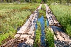 Houten bevloering van de raad door het moeras stock afbeeldingen