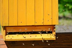 Houten bijenkorf en bijen royalty-vrije stock foto's