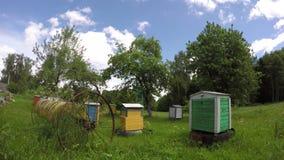 Houten bijenkorfgroep en oude roestige paardhark in tuin Timelapse 4K stock video