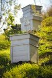 Houten bijenkorven Royalty-vrije Stock Afbeeldingen
