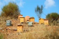 Houten bijenkorven Stock Foto's