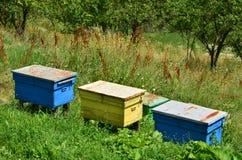 Houten bijenkorven op heuvelhelling Stock Afbeeldingen