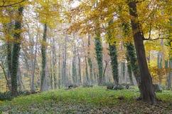 Houten bomen Royalty-vrije Stock Afbeeldingen