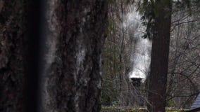 Houten boomboomstammen en schoorsteen die in bos roken stock video