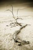 Houten boomstam binnen op de kust stock afbeeldingen