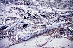 Houten boomstammen binnen op de kust - gestemd beeld stock fotografie
