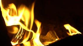 Houten brandwonden met een heldere vlam stock videobeelden