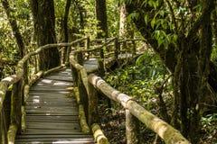 Houten brug in Bemost Hooglanden Tropisch Regenwoud in de Bergen van Thailand Het Nationale Park van Inthanon van Doi stock foto's
